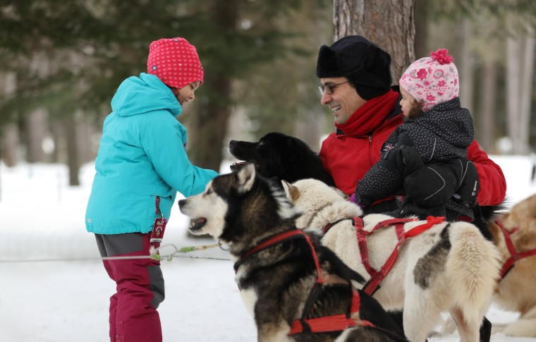 Young girl interacting with a group of sled dogs