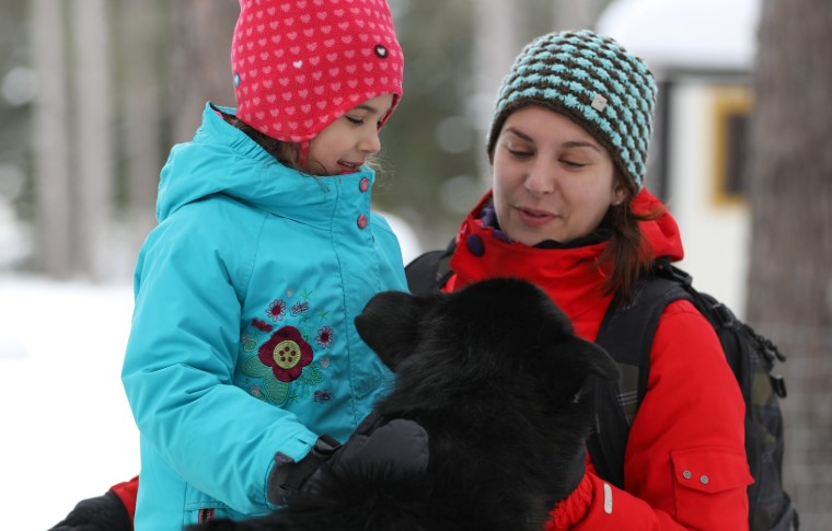 A young girl petting a sled dog