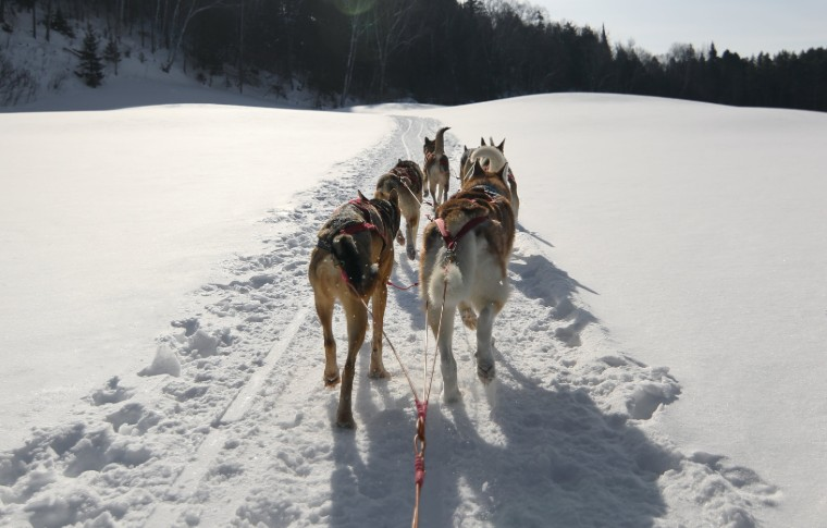 Perspective view from behind of dogs pulling the sled
