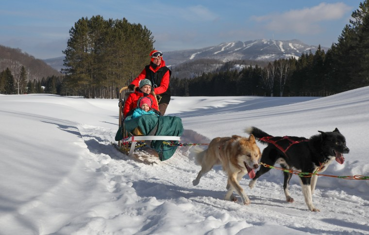 A group of high energy dogs pulling a dog sled