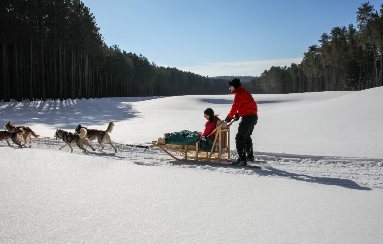 A dog sled being pulled across the snow