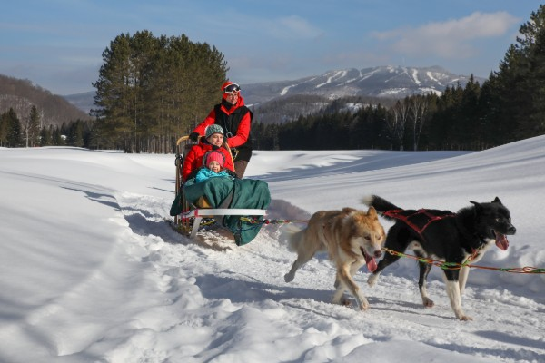 Dogsledding – Diable Adventure. A group of high energy dogs pulling a dog sled